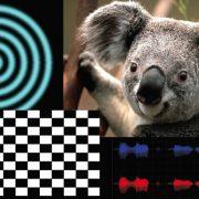 stim2 for auditory and visual stimulation